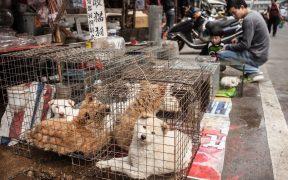 Ciudad en China prepara prohibición de comer gatos y perros tras brote