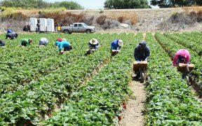 Precios globales agrícolas seguirán en aumento este 2021, prevé Banco Mundial