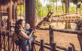 parques-zoologicos-mexico-piden-ayuda-para-mantener-animales