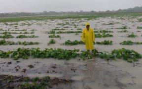 cristobal-ciclon-campesinos-alertan-perdidas-cosechas