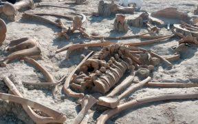 El INAH deberá hacer la recolección de los fósiles. Foto: INAH