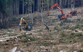 WWF alerta por perdida de biodiversidad en América Latina