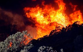 Desalojan a miles de residentes de la región vitivinícola de California, por los incendios