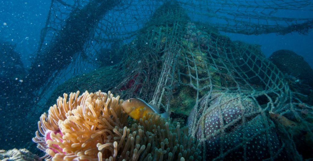 Plástico de las redes de pesca, amenaza más letal para las especies marinas: WWF