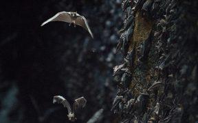 Origen de la Covid se debe buscar en cuevas de murciélagos: OMS