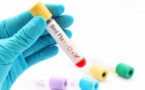 Rusia reporta el primer caso en humanos con la cepa H5N8 de gripe aviar