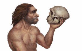 Descendientes de neandertales tienen menor riesgo de infección grave por Covid-19, revela estudio