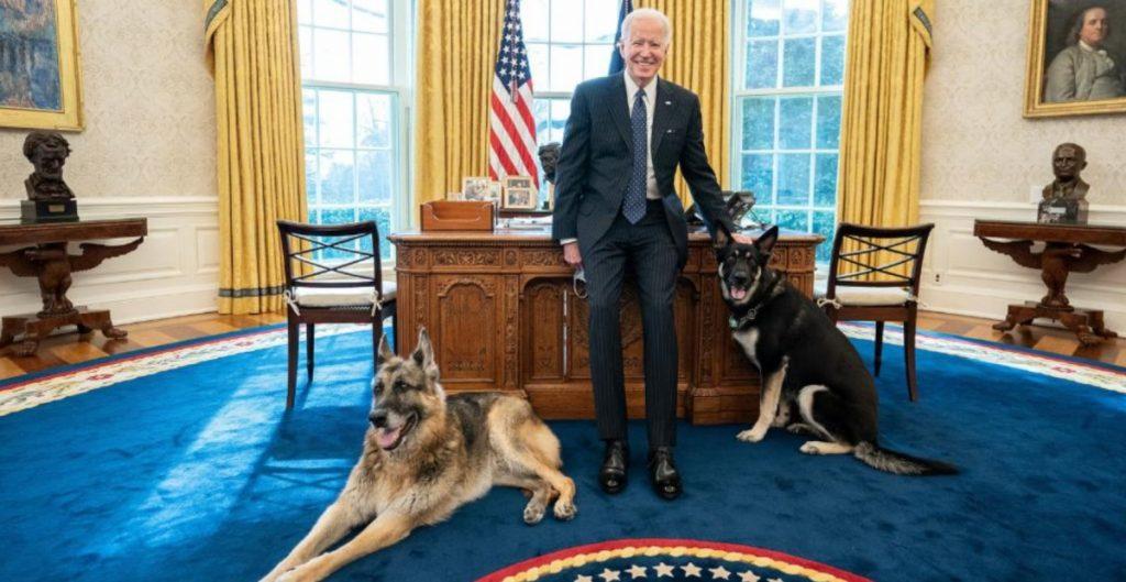 Joe Biden presume a sus perros descansado en el Despacho Oval de la Casa Blanca