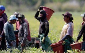 Secretaría de Agricultura prevé crecimiento de 2.65% en producción de maíz, pese a sequía en México