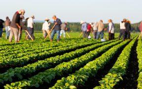 Trabajadores mexicanos agrícolas recibirán vacuna contra Covid-19 en Canadá