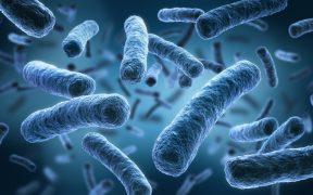 Descubren tres bacterias desconocidas en la Estación Espacial Internacional