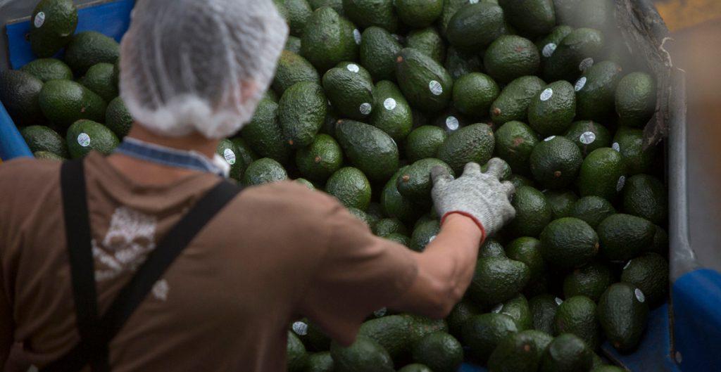 En CDMX aguacate llega hasta a 80 pesos por kilo