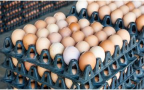 precio-huevo-continua-encareciendose-llega-40-pesos-kilogramo-profeco