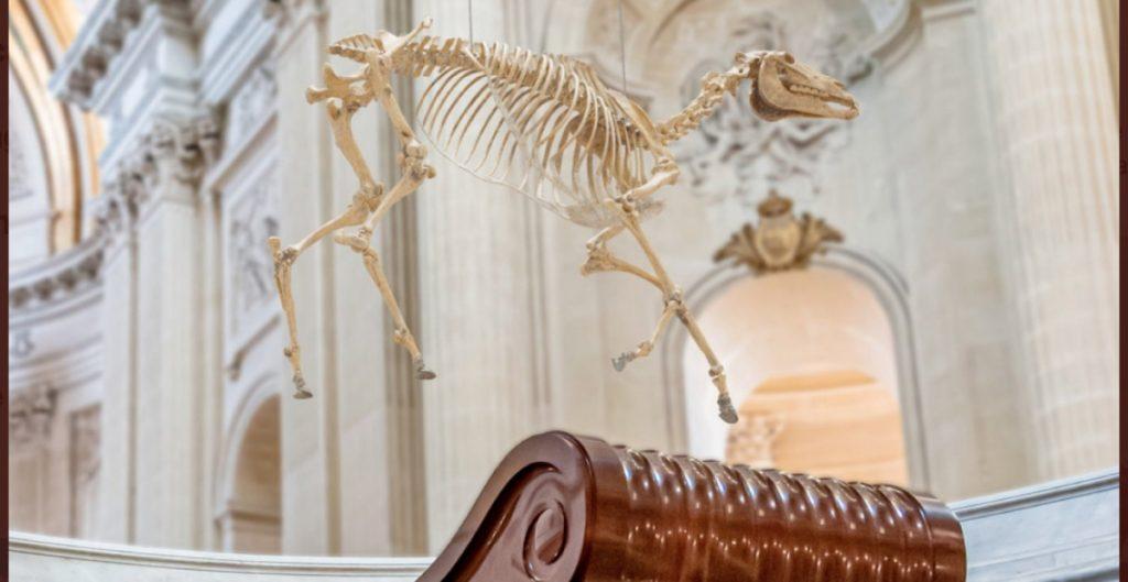 Obra de arte que muestra el esqueleto del caballo de Napoleón sobre su tumba, causa polémica en Francia