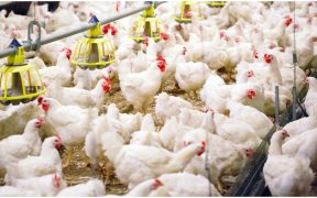 consumo-de-pollo-mexico-se-contrajo-primer-trimestre-precio-subio