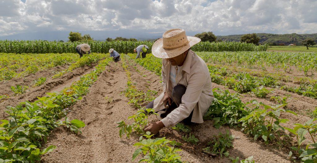 El USDA comenzará la condonación de deudas a agricultores de minorías en junio