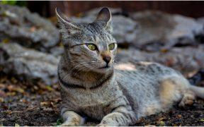 por-pandemia-gatos-abandonados-isla-desierta-brasil