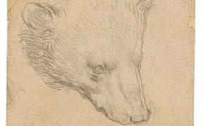 El boceto 'Cabeza de Oso' de Da Vinci será exhibido en Londres previo a su subasta
