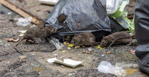 Detectan el primer caso humano de hantavirus en el estado de Michigan