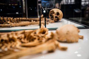 Los esqueletos de hombres de la era vikinga, relacionados genéticamente, serán exhibidos en Copenhague