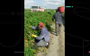 organizacion-urge-trabajadores-agricolas-vacunarse-contra-covid-contrario-perderan-empleo-asegura