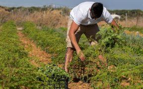 fuertes-temperaturasestados-unidos-amenazan-salud-ingresos-trabajadores-latinos