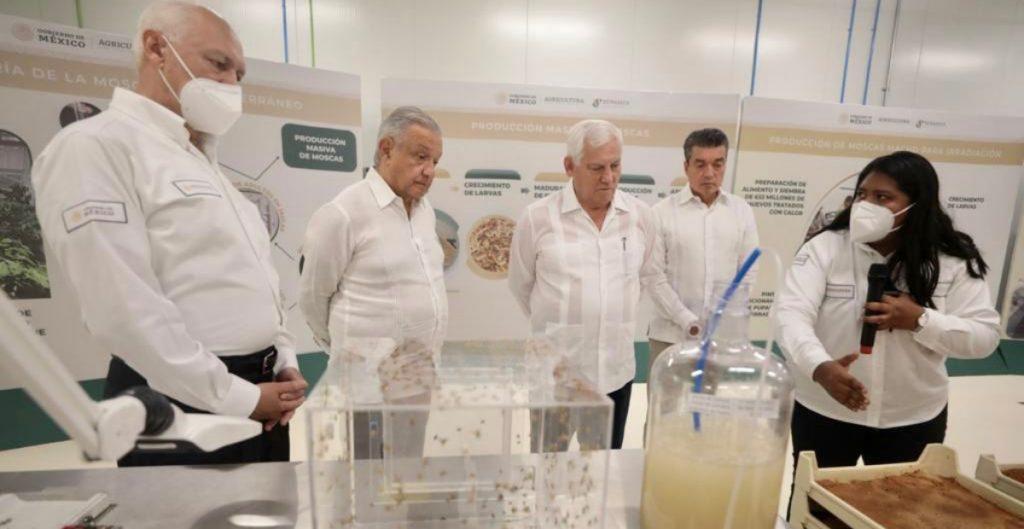 """AMLO anuncia revisión a los 2 millones de beneficiarios del programa """"Producción para el Bienestar"""""""