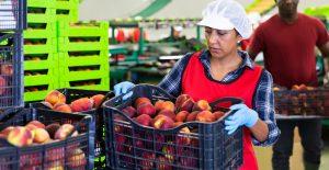 EU y México acuerdan proteger derechos de trabajadores en territorio estadounidense