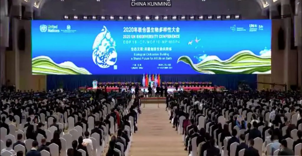 """Más de 100 países firman """"Declaración de Kunming"""" sobre biodiversidad, pero no asumen compromisos"""
