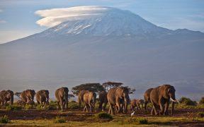 Reporte de la OMM advierte sobre la rápida desaparición de los glaciares en África