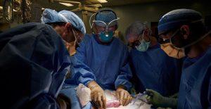 Equipo médico en Nueva York logra el primer trasplante de riñón de un cerdo a un humano