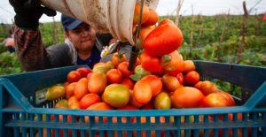 EU frena entrada tomates de firmas mexicanas sospechosas de trabajo forzado