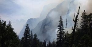 Estudio de UNESCO muestra que 10 bosques emiten más dióxido de carbono del que absorben